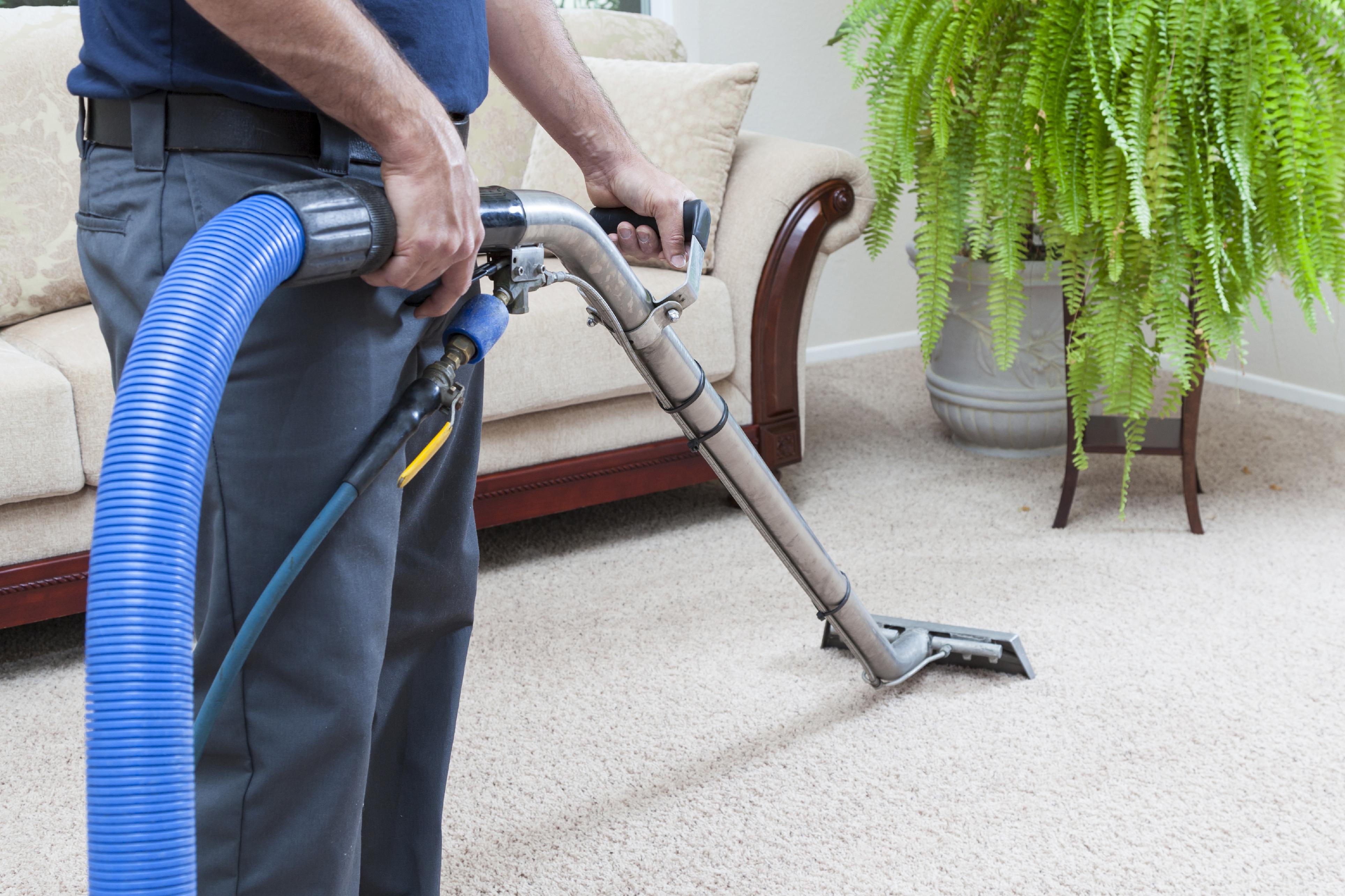 Tips para limpiar tus alfombras steamgenie - Limpiador de alfombras ...